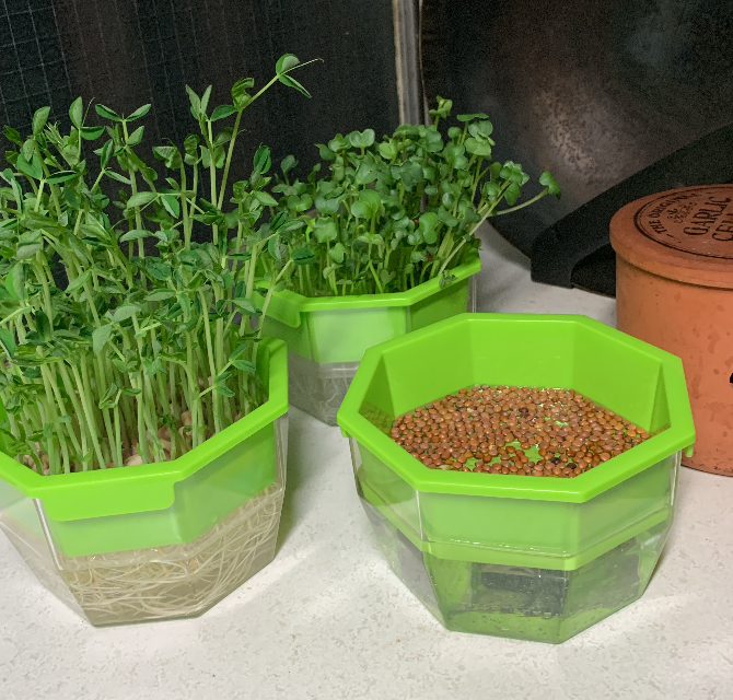 plantfarm.jpg